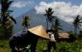 Mount Agung, a volcano which had its alert status raised to the highest level last week, is seen as farmers tend their crops near Amed, on the resort island of Bali.