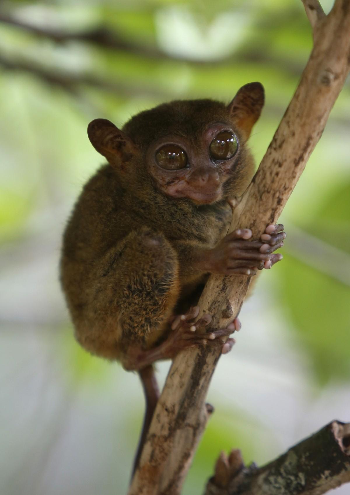 From Chameleon To Deer World S 10 Smallest Animals