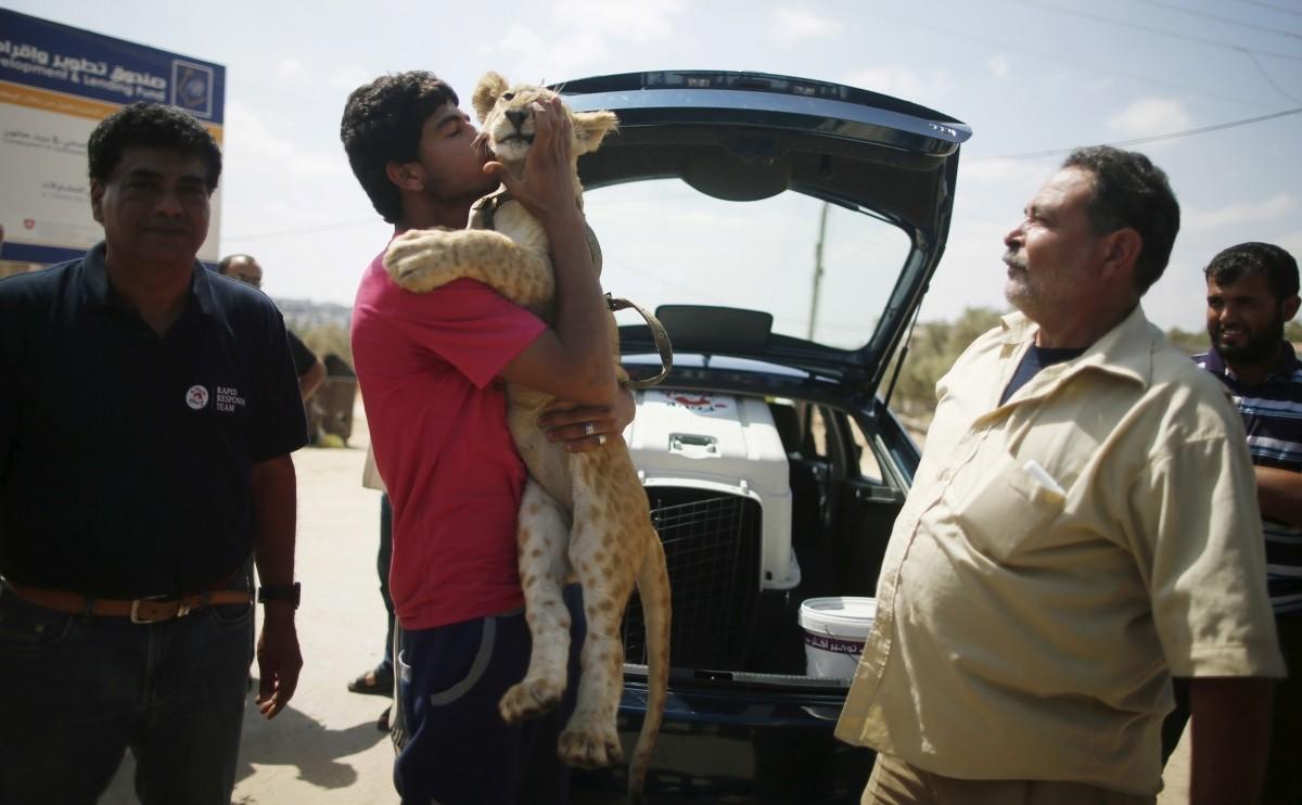 Gaza lion cubs