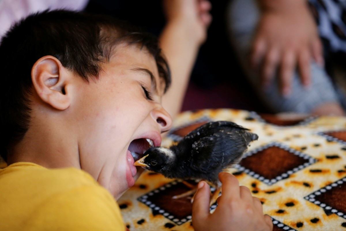 A boy plays with a chick after fleeing his home due to the clashes on the outskirts of Falluja, gather in the town of Garma May 30, 2016.