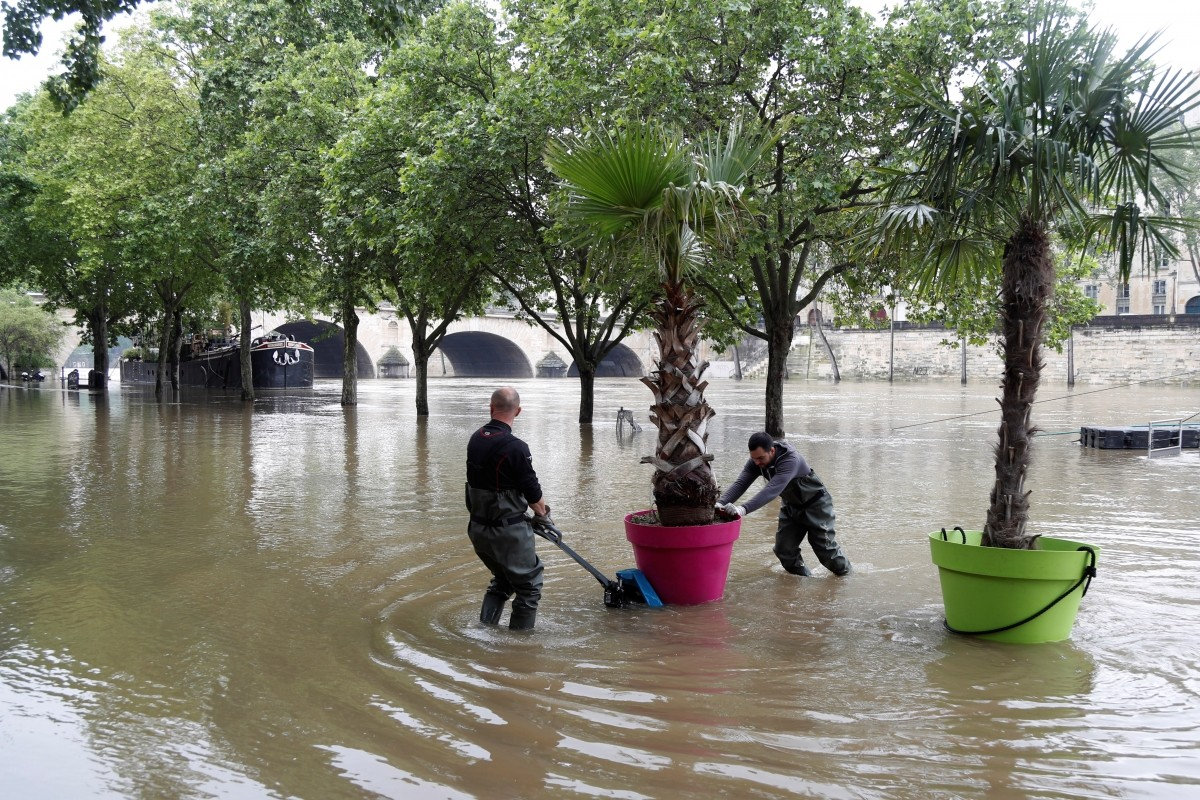 Workers remove palm trees from the banks along the Seine River in Paris.