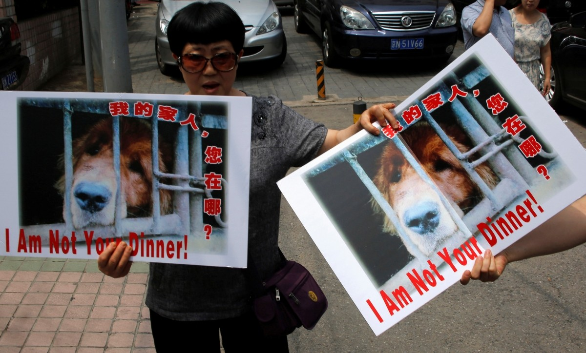 Animal activists hold banners against Yulin Dog Meat Festival in front of Yulin City Representative office in Beijing, China, June 10, 2016.