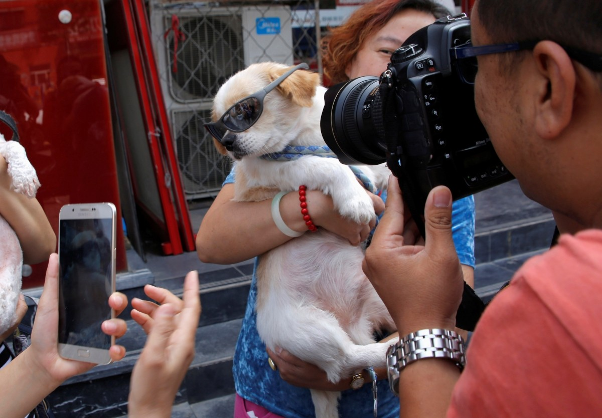 Animal activists take pictures of a dog which was rescued from a dog meat trader before their gathering against Yulin Dog Meat Festival in Beijing, China, June 10, 2016.