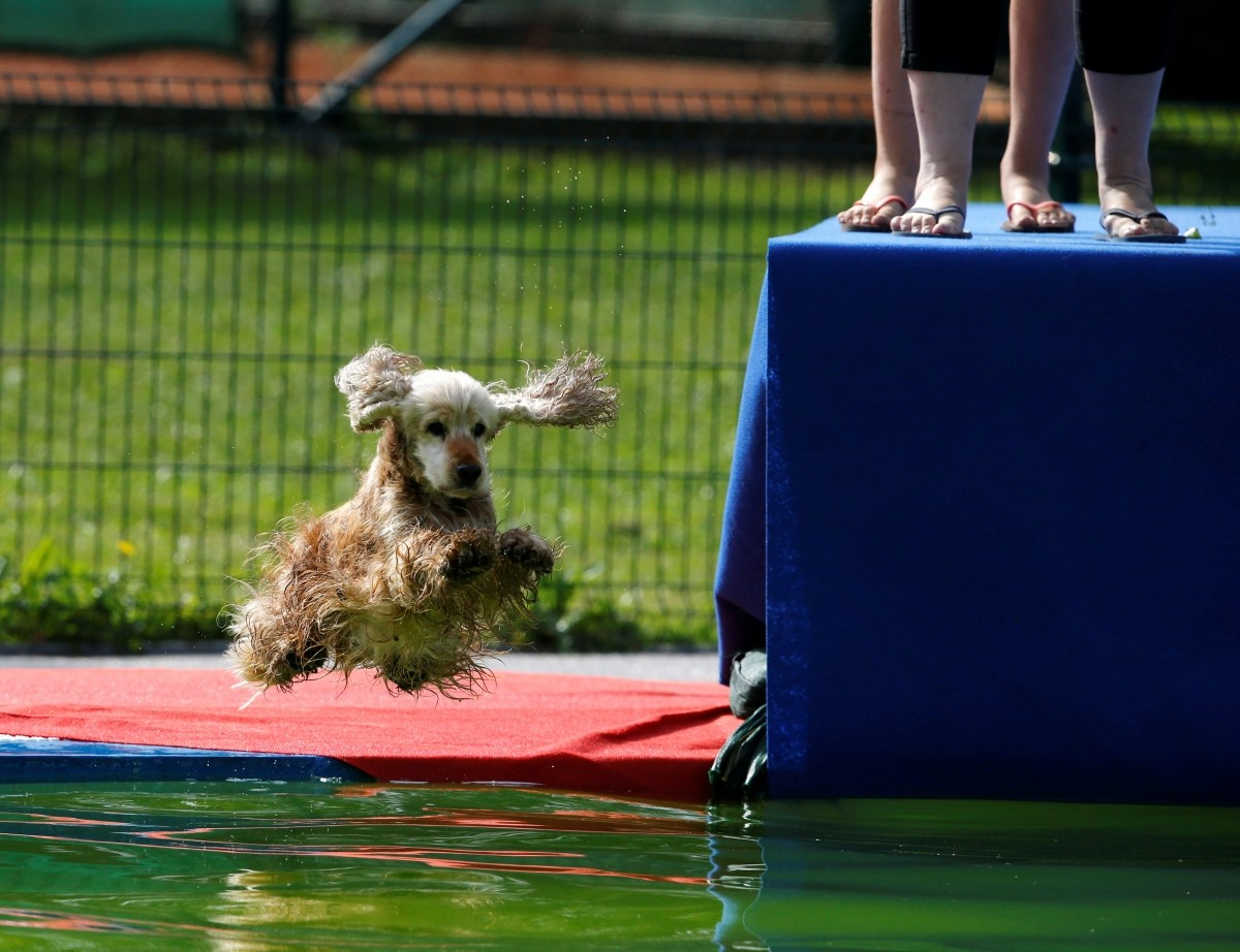 A dog jumps into the pool during the Flying Dogs competition in Kamnik, Slovenia, September 10, 2016.