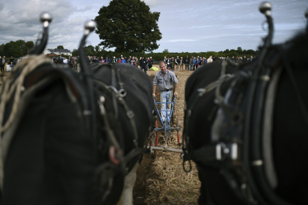 A man competes in the Irish National Ploughing Championships in Tullamore, Ireland September 20, 2016.
