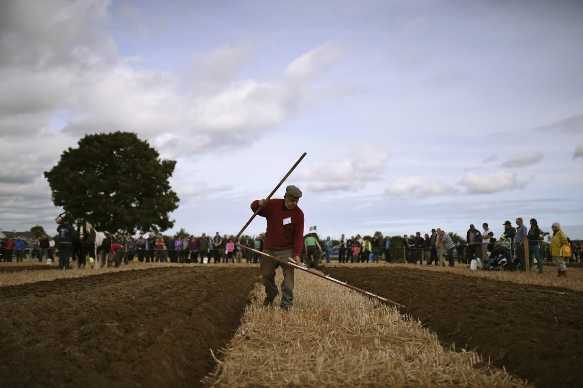 A man uses a measuring ruler during the Irish National Ploughing Championships in Tullamore, Ireland September 20, 2016.