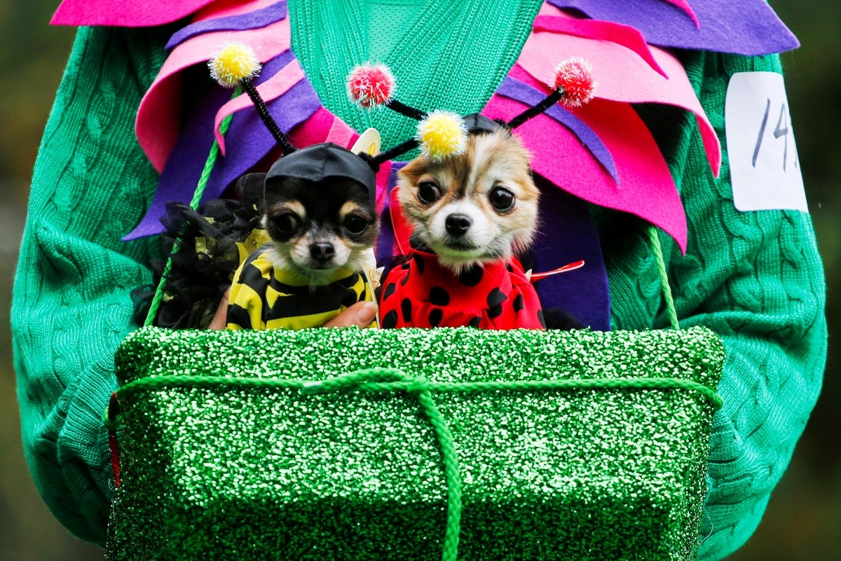 A reveller takes part with her dogs in the annual halloween dog parade at Manhattan's Tompkins Square Park in New York, U.S. October 22, 2016.