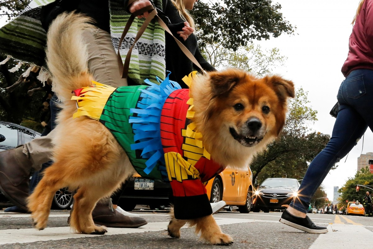 A dog dressed as a pinata takes part in the annual halloween dog parade at Manhattan's Tompkins Square Park in New York, U.S. October 22, 2016.