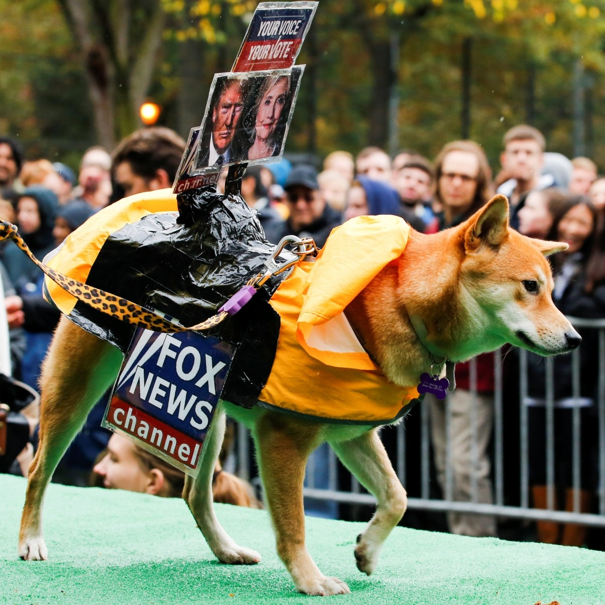 A dog dressed as Fox News channel with the pictures of Democratic U.S. presidential nominee Hillary Clinton (R) and Republican U.S. presidential nominee Donald Trump takes part in the annual halloween dog parade at Manhattan's Tompkins Square Park in New York, U.S. October 22, 2016.