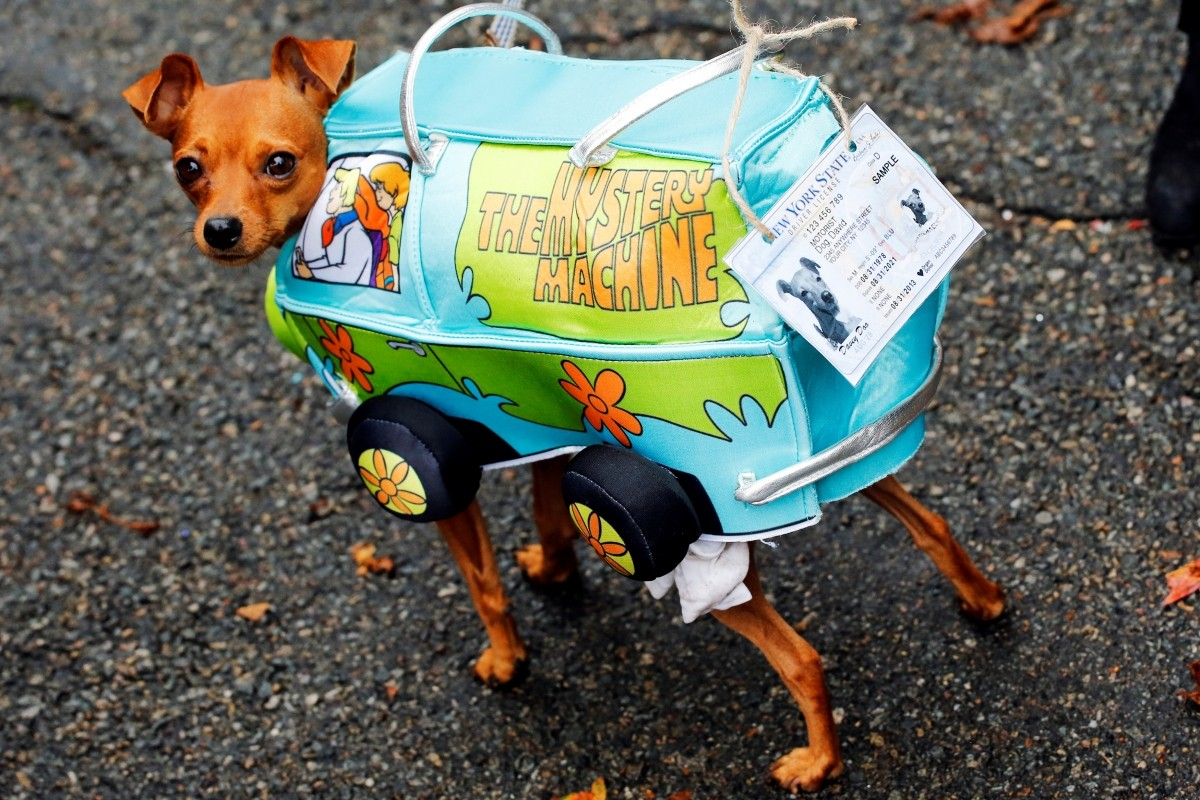 A dog takes part in the annual halloween dog parade at Manhattan's Tompkins Square Park in New York, U.S. October 22, 2016.