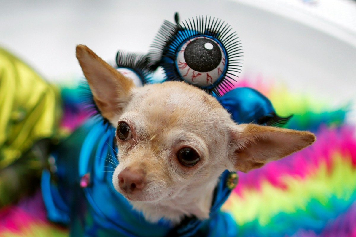 A dog dressed as an alien takes part in the annual halloween dog parade at Manhattan's Tompkins Square Park in New York, U.S. October 22, 2016.