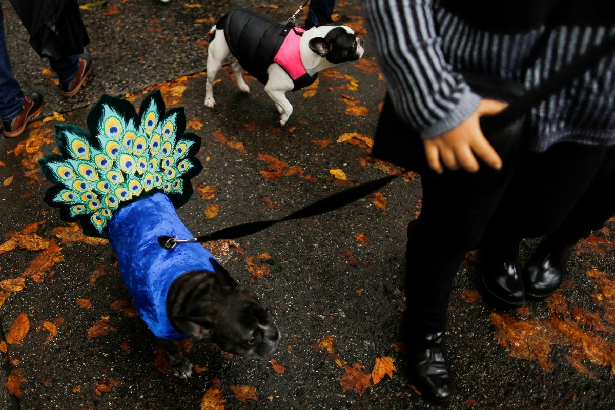 Dogs take part in the annual halloween dog parade at Manhattan's Tompkins Square Park in New York, U.S. October 22, 2016.