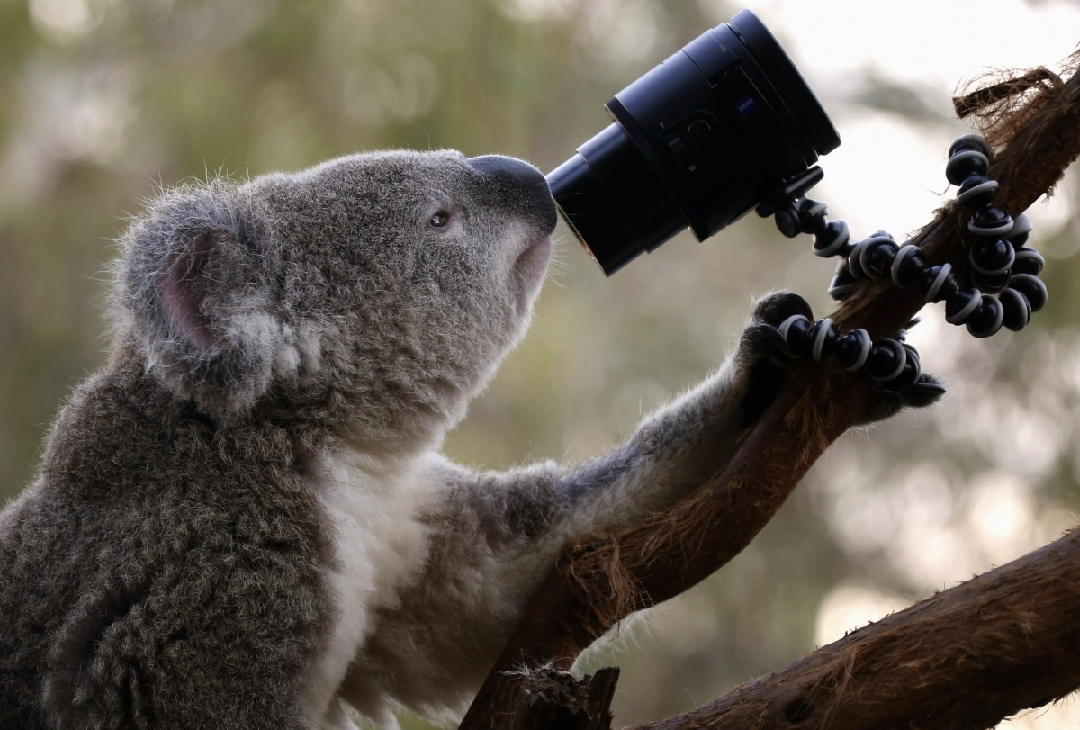 Camera-friendly animals