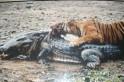 Legendary Ranthambore tigress Machhli dies, cremated with full Hindu rituals [PHOTO]