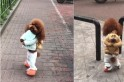 Pup walking on hind legs in girls' costumes is aww-dorable, but do you think it's fair on the dog? [VIDEOS]