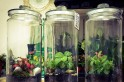 Green secret agents: Genetically engineered spy plants to help Pentagon detect potential threats