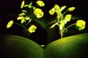 Illuminating plants may replace electricity soon as researchers transform trees into light source
