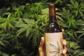 World's first cannabis-infused, alcohol-free wine: Gives high in 15 minutes, keeps hangover at bay