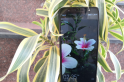 Tecno Camon i review: Dependable budget Android phone with good camera