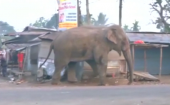 Wild elephant goes on a rampage in Indian village