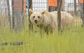 colorado-peta-frees-elderly-bears-after-20-years-locked-in-tiny-cages