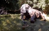 Injured bull elephant treated by Zimbabwe conservationists
