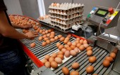 Europe egg scandal