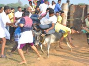 People participate in Jallikattu despite Supreme Court ban in Palamedu village of Madurai on Jan 15, 2017. Jallikattu is popular and ancient bull-taming sport, played usually around Pongal festival in Tamil Nadu.