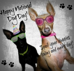 National Dog Day,happy National Dog Day,National Dog Day 2015,National Dog Day quotes,National Dog Day pictures,National Dog Day message