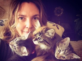 The actress, 42, shared a photo of her kittens on her Instagram account on Wednesday, saying she had not expected her family to grow so large, reports people.com.