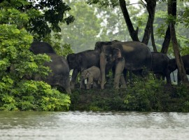 At least 225 animals have died in the Kaziranga National Park in Assam as a second wave of devastating floods lashed the state, park officials said on Saturday. As of Saturday, 30 per cent of the park was still inundated. Earlier this month, the first wave of floods had submerged over 70 per cent of the park and led to the death of 105 animals, park Director Satyendra Singh told IANS.
