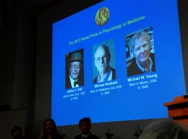 The names of Jeffrey C. Hall, Michael Rosbash and Michael W. Young are displayed during a news conference to announce the winner of the Nobel Prize in Physiology or Medicine in Stockholm. Their work helps explain how people experience jet lag when their internal circadian rhythms get out of sync, while also having wider implications for disorders ranging from insomnia to depression to heart disease. Chronobiology, or the study of biological clocks, is now a growing field of research thanks to the pioneering work of the three scientists, who explained the role of specific genes in keeping fruit flies in step with light and darkness. Today, scientists are exploring new treatments based on such circadian cycles, including establishing the best times to take medicines, and there is an increased focus on the importance of healthy sleeping patterns.