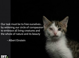 """""""Our task must be to free ourselves… by widening our circle of compassion to embrace all living creatures and the whole of nature and its beauty."""" » Albert Einstein"""