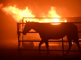A horse which was left behind after an early-morning Creek Fire that broke out in the Kagel Canyon area in the San Fernando Valley north of Los Angeles, is seen in Sylmar, California, U.S., December 5, 2017.