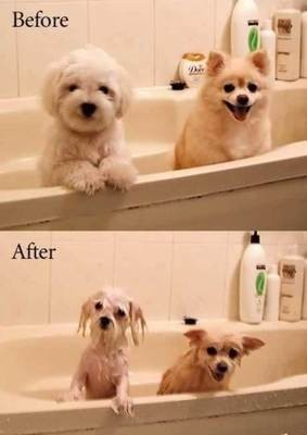 Funny Dog Pictures,Funny dog photos,Funny dog images,Funny pictures,cute dog pictures,Latest funny dog photos