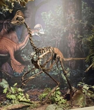 New Horned Dinosaur Uncovered with Unique Wing-Shaped Headgear (Representational Image)
