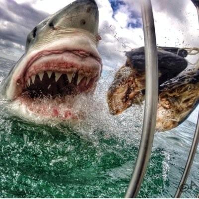 Schoolteacher Clicks Selfie with Great White Shark? Photo Goes Viral