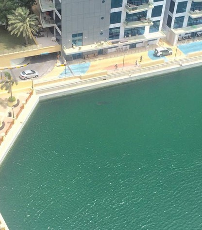 Whale shark spotted in Dubai,Shark spotted in Dubai,Whale shark,Dubai Marina,Shark,Shark in Dubai,viral photos