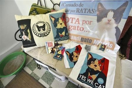Propaganda for mayoral candidate Morris the Cat is pictured at his home in Xalapa, capital of the state of Veracruz June 15, 2013.  REUTERS/Oscar Martinez