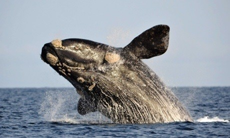Minke Whale Contracted Virus, Killed Over 1200 Dolphins in New Jersey [Represenetational Image]