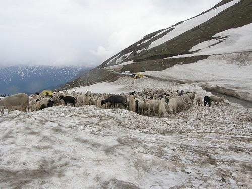 Snowfall at Rohtang Pass, Himachal Pradesh