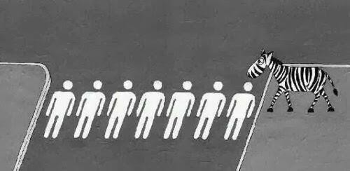Twitter pic where Zebra is crossing a 'human crossing'