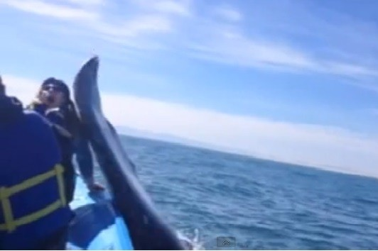 Whale Slaps Teenager on the Face With its Tail