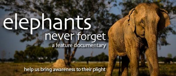 World Elephant Day,Elephant Day 2015,Elephant Day,World Elephant Day 2015,World Elephant Day quotes,World Elephant Day sms,World Elephant Day pictures
