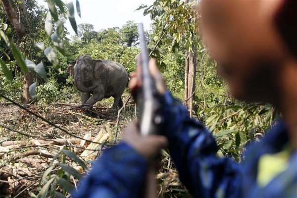 A story claiming that an African billionaire slaughtered 20 elephants for his birthday is found to have been a hoax.