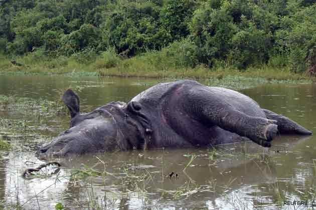 Another Rhino Slaughtered in Kaziranga
