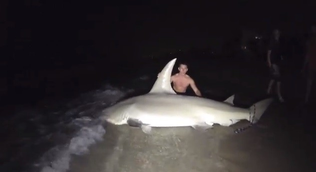 Giant Hammerhead Weighing 700 Pounds Caught by Students off Florida Beach [VIDEO]