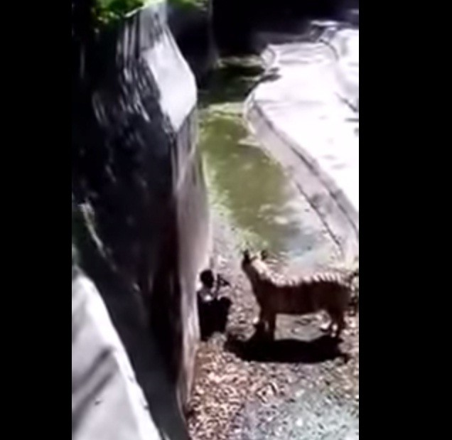 Tiger killed boy in Delhi Zoo