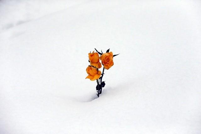 Northern Ireland Snow