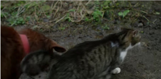 cat leads the way for blind dog